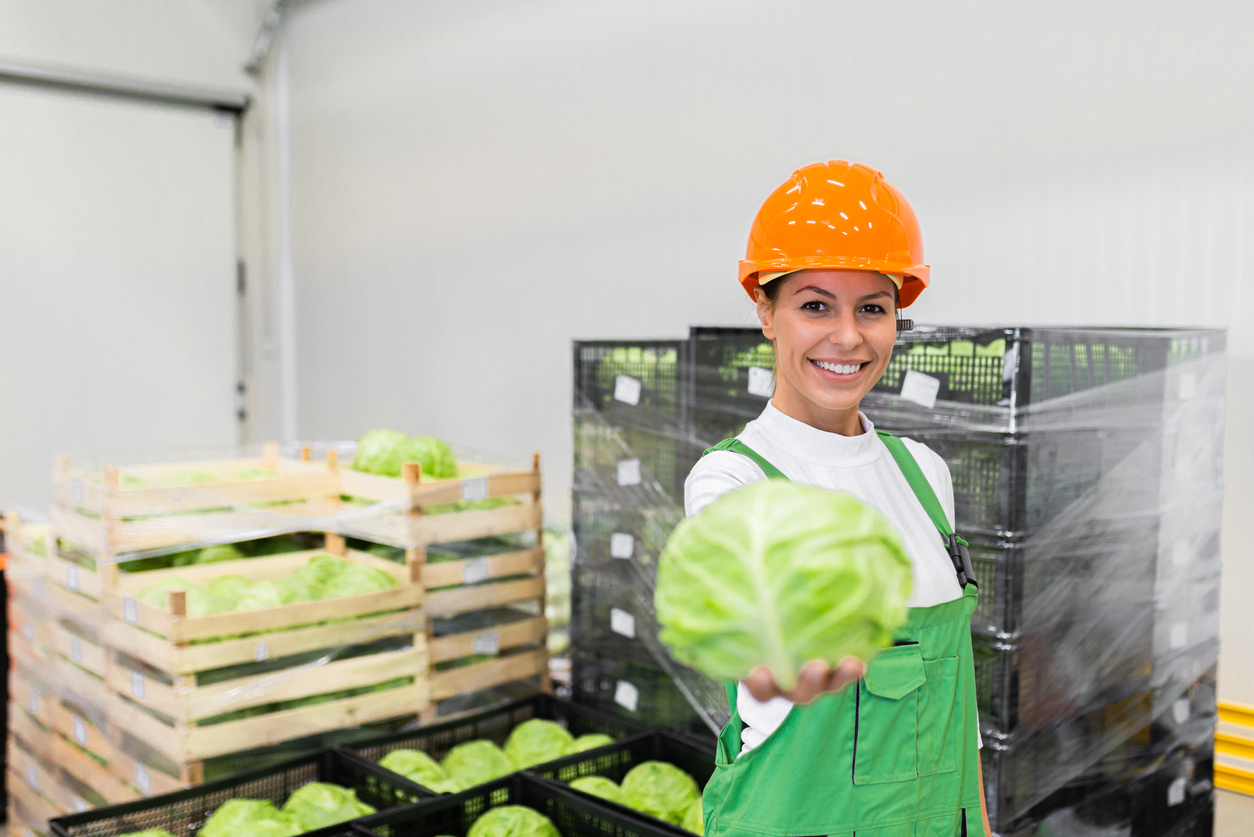 Portrait of a young woman holding cabbage at food production warehouse.